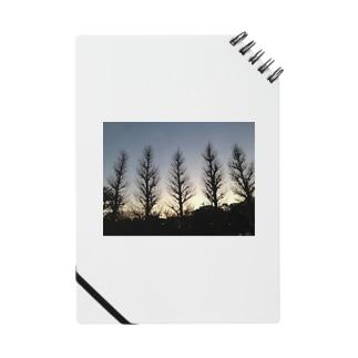 冬の木 Notes