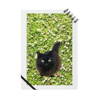 """黒猫 """"Tango"""" on the grass!  Notes"""