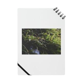 草の匂い Notes