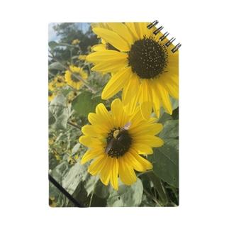 ミツバチとヒマワリ Notes