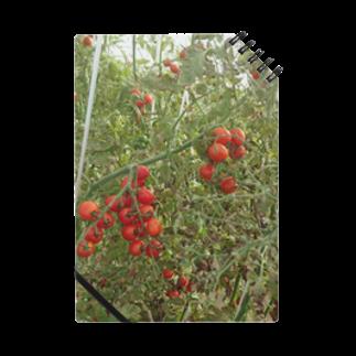 Masakiのミニトマト収穫前 Notes