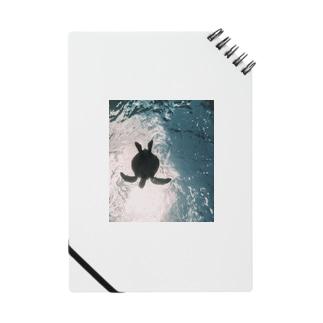 ウミガメ Notes