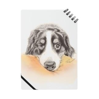 犬絵ペン画 バーニーズ #1 Notes