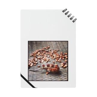 菖蒲の種 Notes