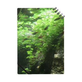 熱帯魚 Notes