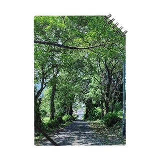 木の抜け道自然の開放 Notes