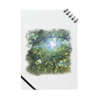 木漏れ日 Notes