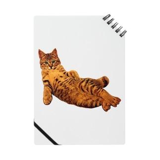 Elegant Cat 2 Notes