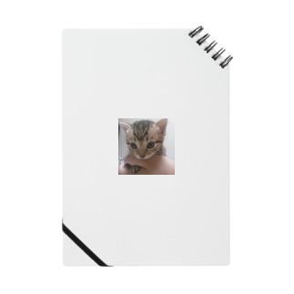 子猫 Notes