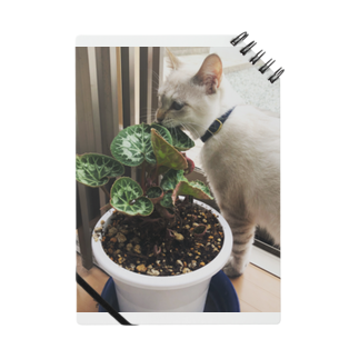 SHOP_KAGENEKOの草パク猫 Notes