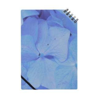 青い紫陽花 Notes