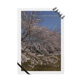 満開の桜 Notes