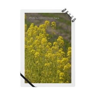 菜の花 春に佇む  Notes