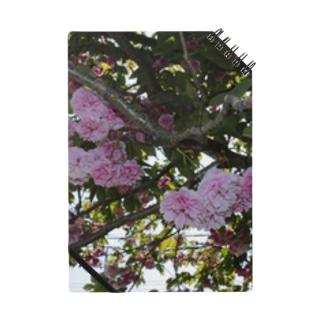 残った桜 Notes