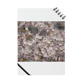 光景 sight0053 桜 2015_009 サクラ Notes