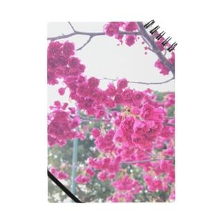 フリルな桜 Notes