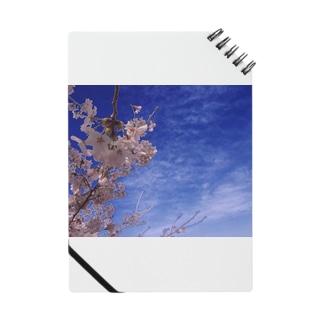 hiroki-naraの桜 サクラ cherry blossom DATA_P_093 Notes
