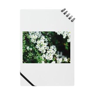 ユキヤナギ Notes