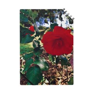薔薇色な人生 Notes