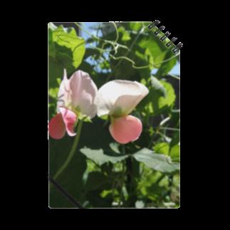 FUCHSGOLDの日本の野菜:エンドウの花 Pea flower Notes