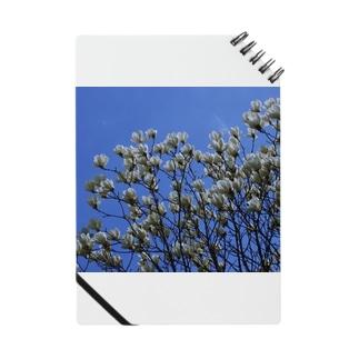 白木蓮 はくもくれん 春 spring DATA_P_103 Notes