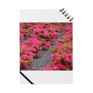 ツツジ azalea DATA_P_118 Notes