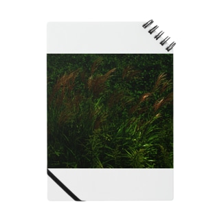 ススキ japanese pampas grass Notes