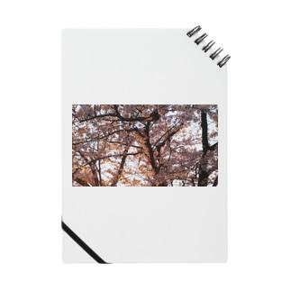夕焼けに照らされた桜 Notes