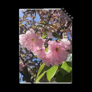 Jodlerin Sakura Kitagawa und die Edelweißmusikantenの花は咲く  2020  花シリーズ1 Notes
