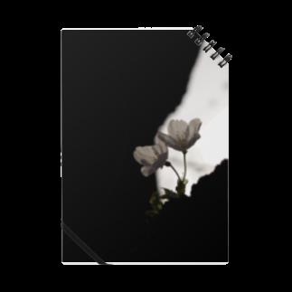まきまきふぉとの桜 Notes