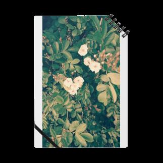 ゆぅの小さな発見 Notes