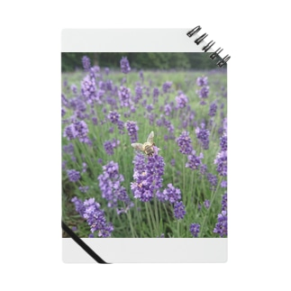 lavender bee Notes