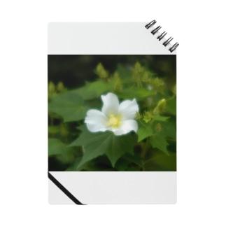芙蓉 DATA_P_130 Confederate Rose ハスの花の古名 Notes