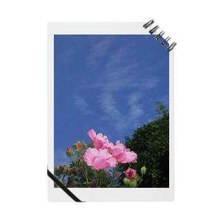 芙蓉 DATA_P_133 Confederate Rose ハスの花の古名 Notes