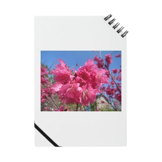 TAIWANの桜 Notes