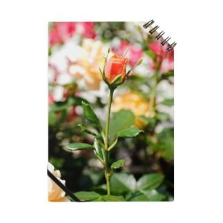 FLOWERS-蕾- Notes