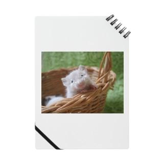 ひょっこりマウス Notes
