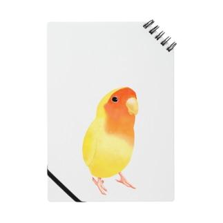 コザクラインコ おすましルチノー【まめるりはことり】 ノート