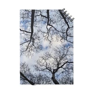 Winter sky Notes