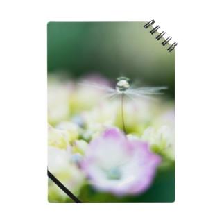 angel of hydrangea 170603 Notebook