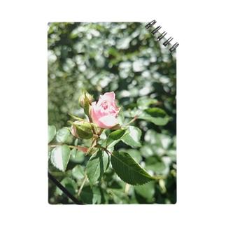 一輪の薔薇 Notes
