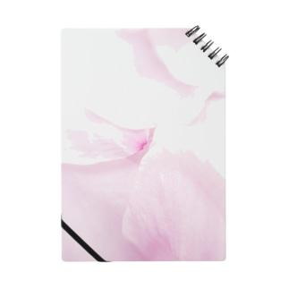 桜幻想 Notes