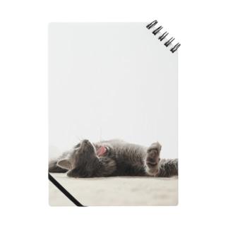 あくびする 猫 Notes