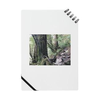 BjjBa4の屋久島の森 Notes