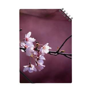 桜とあずき色 ノート