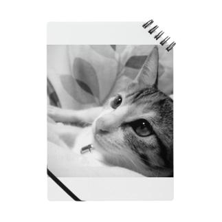 ほぼひめ。の三毛猫のひめ 1 Notes