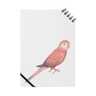 アキクサインコ ピンク【まめるりはことり】 Notes