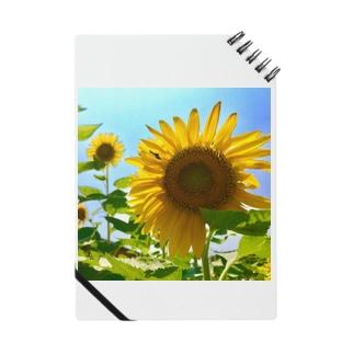 PaP➡︎Poco.a.Pocoの夏の日の向日葵。 Notes