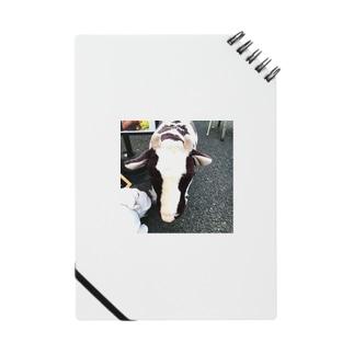 草食動物 Notes