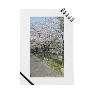 いまさら桜 Notes